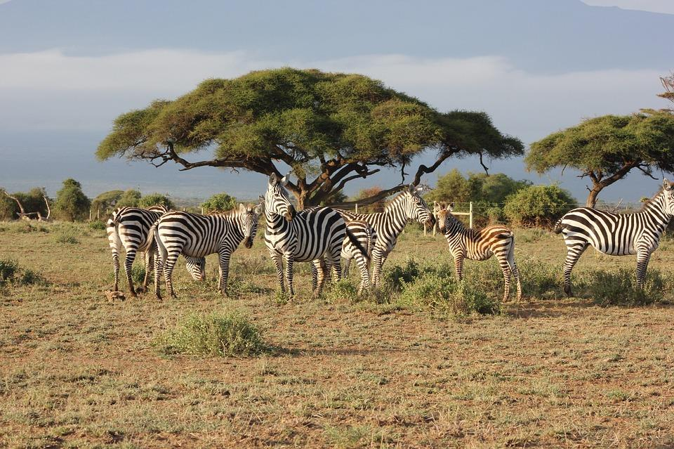 KENYA SAFARİ